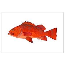 Vermilion Rockfish v2 Posters