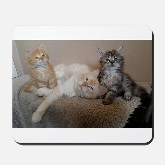 Siberian cat and kitten family Mousepad