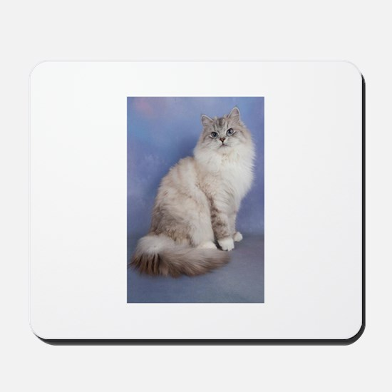 blue tabby colourpoint siberian cat Mousepad