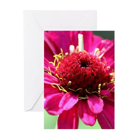 Beauty of The Zinnia Flower Greeting Cards