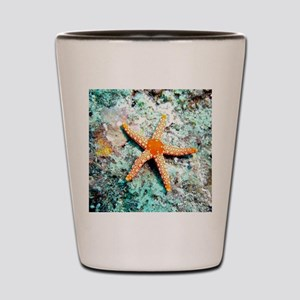 Pretty Starfish Shot Glass