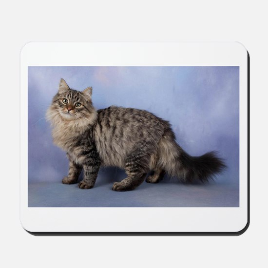siberian spotted tabby cat Mousepad