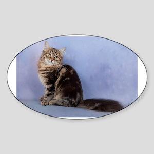 cute siberian tabby cat sideways Sticker