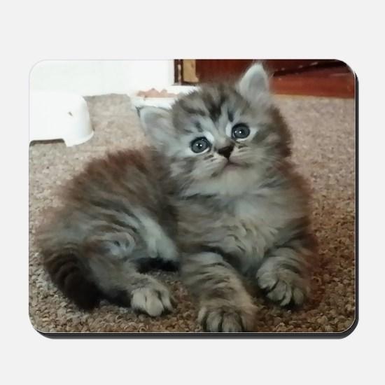 Cute Silver Siberian kitten on carpet Mousepad