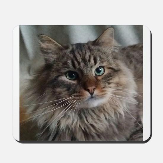 Siberian Tabby Cat face Mousepad