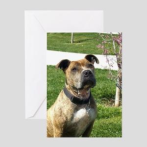 Pitbull Dog Greeting Cards