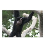 Howler Monkey Postcards (Package of 8)