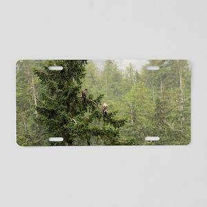 Bald Eagles Aluminum License Plate
