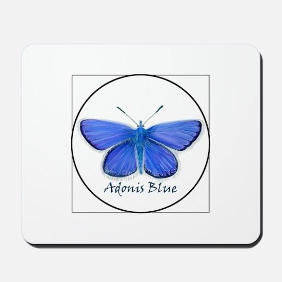 Adonis blue butterfly (Lysandra bellargus) Mousepa