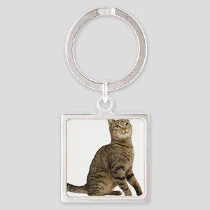 cat tabby Keychains