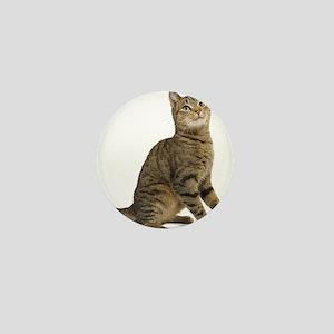 cat tabby Mini Button