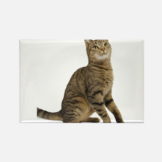 cat tabby Magnets
