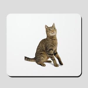 cat tabby Mousepad