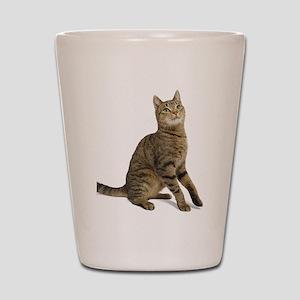cat tabby Shot Glass