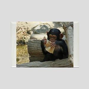 Chimpanzee_2015_0101 Magnets