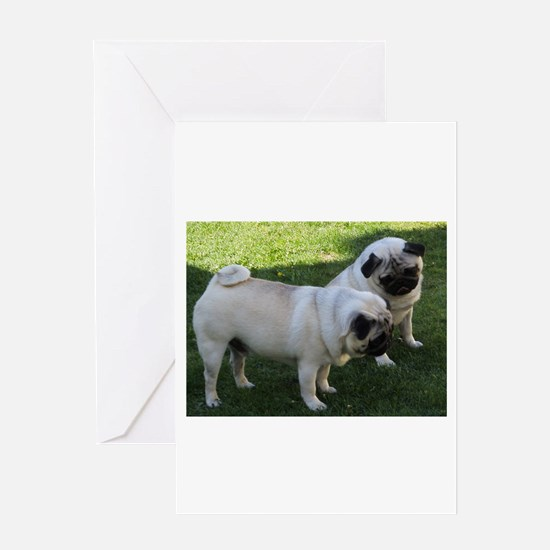Two fawn Pugs Greeting Cards