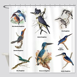 Birder Kingfisher Illustrations Shower Curtain
