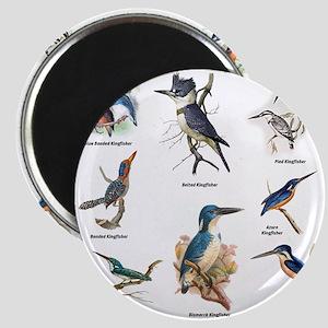 Birder Kingfisher Illustrations Magnets