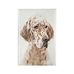 English Setter (Orange Rectangle Magnet (100 pack)