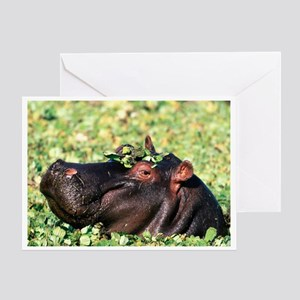 Hippo Casanova Greeting Card