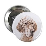 English Setter (Orange Belton) 2.25