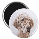 English Setter (Orange Belton) Magnet