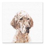 English Setter (Orange B Square Car Magnet 3