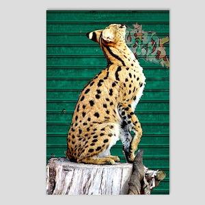 Servals Postcards (Package of 8)