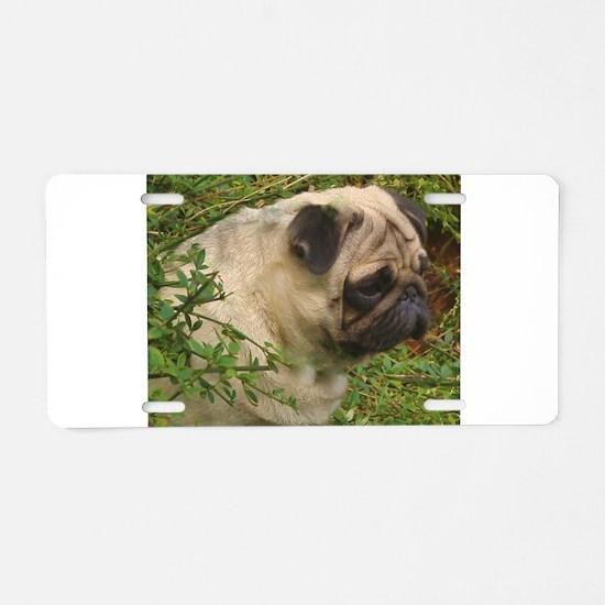 Fawn Pug with foliage Aluminum License Plate