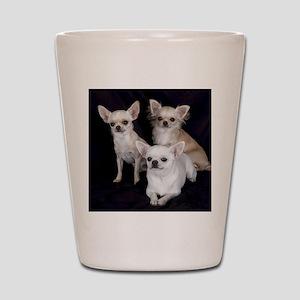 Adorable Chihuahuas Shot Glass