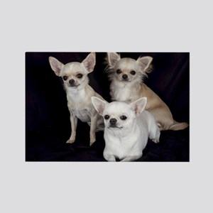 Adorable Chihuahuas Rectangle Magnet