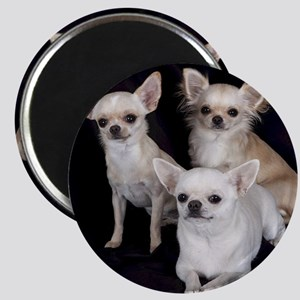 Adorable Chihuahuas Magnet