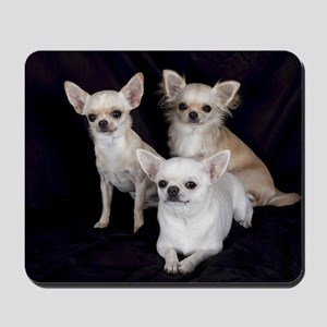Adorable Chihuahuas Mousepad