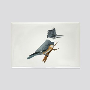 BELTED KINGFISHER Magnets