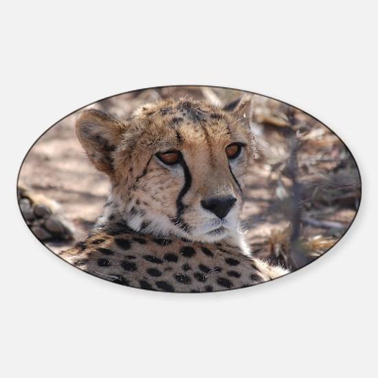 Cheetah Sticker (Oval)