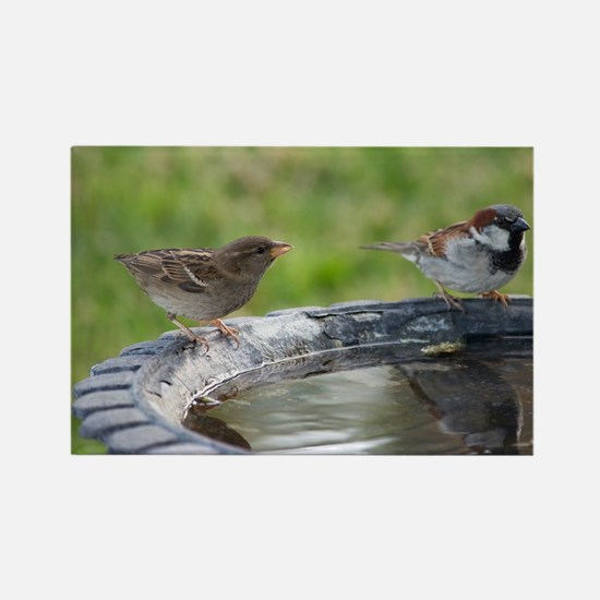 Two Birds at a Birdbath Rectangle Magnet