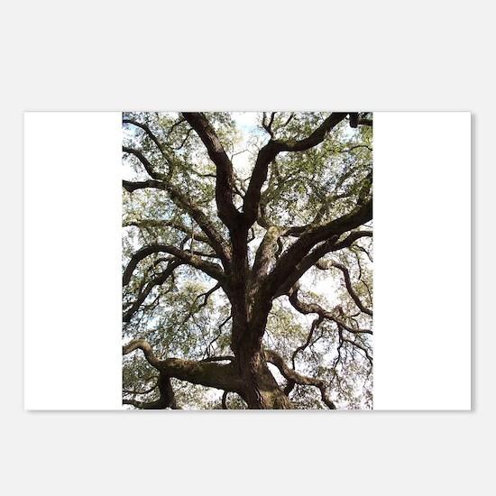 Savannah Oak Postcards (Package of 8)