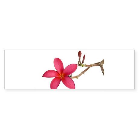 Red Frangipani flower Bumper Sticker