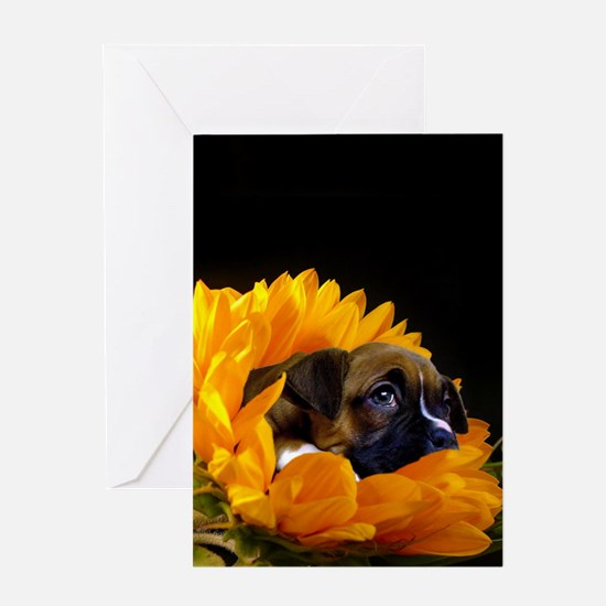 Boxer puppy in sunflower Greeting Cards