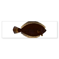 Winter Flounder Bumper Bumper Sticker