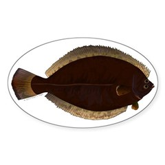 Winter Flounder Decal