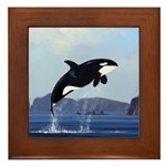 Orca Breaching Framed Tile