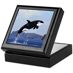 Orca Breaching Keepsake Box