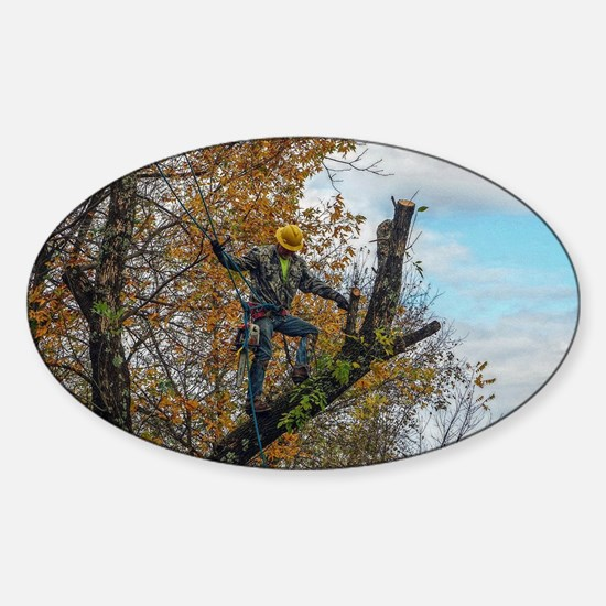 Tree Surgeon Decal