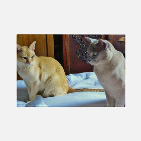 Red and Lilac Burmese Cats Magnets