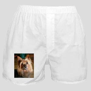 Australian Silky Terrier headstudy Boxer Shorts