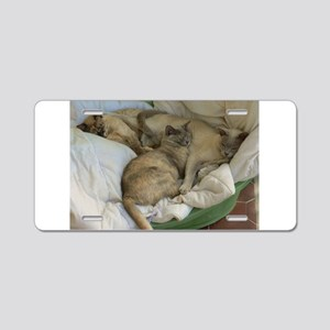 Burmese Cats asleep Aluminum License Plate