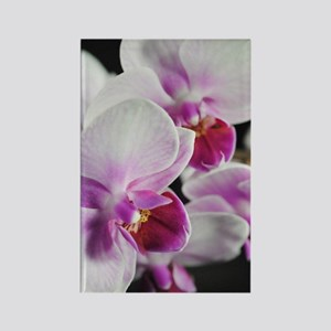 Two Pink White Orchids Rectangle Magnet