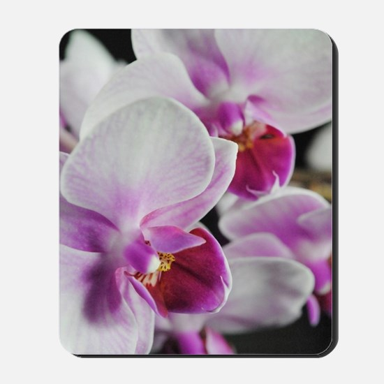 Two Pink White Orchids Mousepad