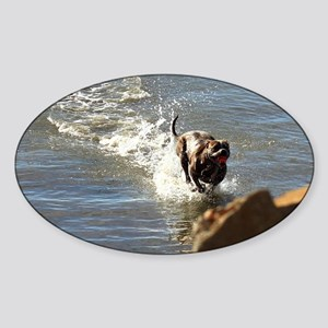 Pitbull dog Sticker (Oval)